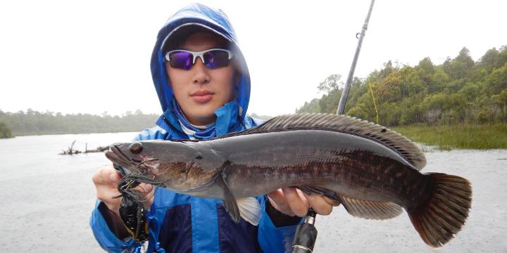 Predator Air Hitam Sungai Kapuas Sahabat Mancing