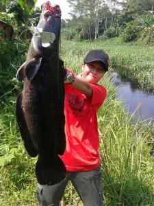 Berbagai jenis ikan air tawar di Kalimantan kerap berhasil didapatkan oleh Icha Yuli salah satunya Toman.