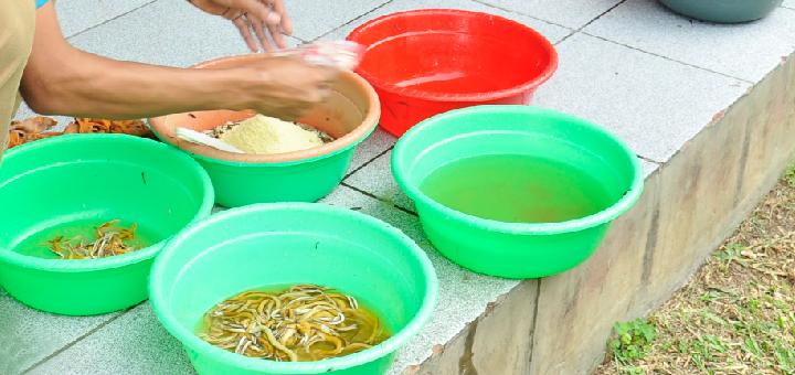 Essen umum digunakan pada adonan umpan untuk lomba-lomba mancing di kolam-kolam pemancingan galatama, harian dan kiloan.