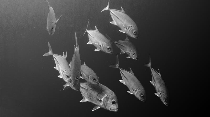 Keberadaan Ikan Di Malam Hari Archives Sahabat Mancing