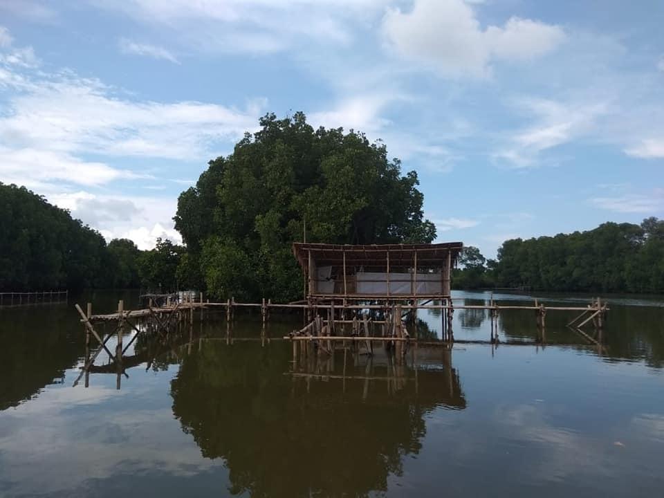 Aspek Ranggon di Perairan Bakau