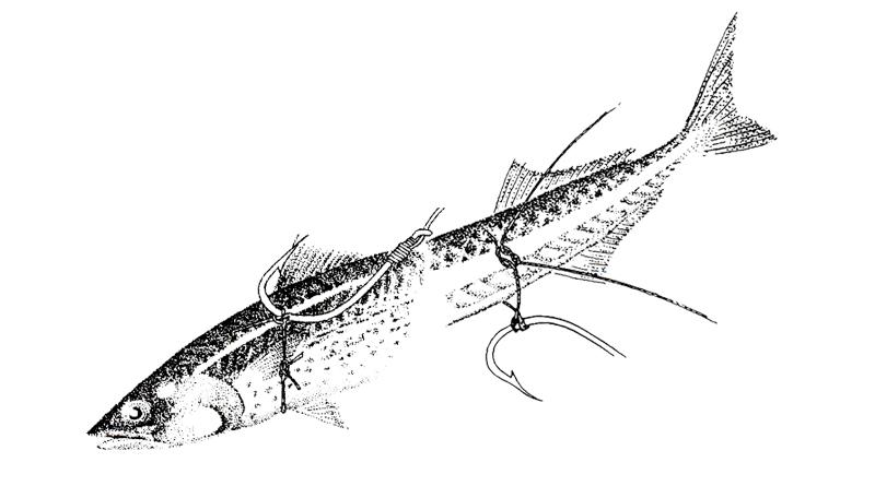 How To: Memasang Kail untuk Umpan Sportfishing
