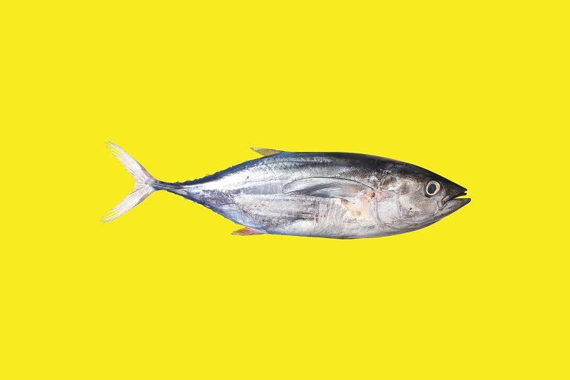 Tulang Ikan Tuna Dikembangkan Jadi Penyerap Limbah