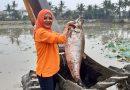 Ikan Belida Jumbo Ditemukan Saat Pembersihan Setu Mangga Bolong